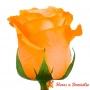 Rosas Damasco