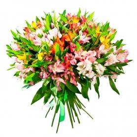 Ramo de 40 Astromelias Multicolor