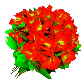 Ramo de 40 Astromelias Color Rojas