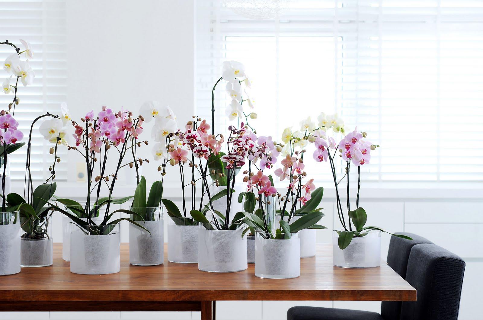 Flores de Amor – Flores para el Amor