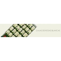 Cajas con Rosas Blancas